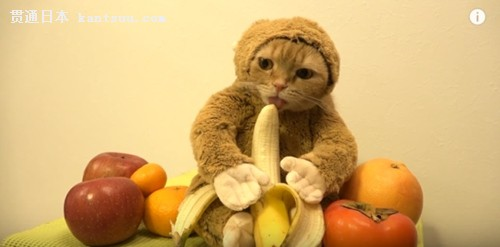 猴子吃东西可爱卡通