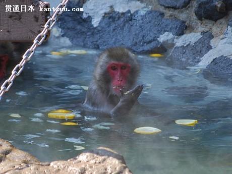 日本动物园内猴子露天泡澡取暖 游客赞可爱