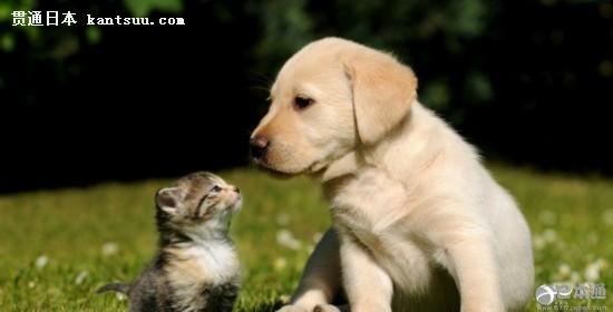 可爱的猫狗宝贝图片