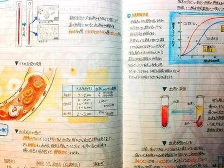 日本学霸的笔记·生物