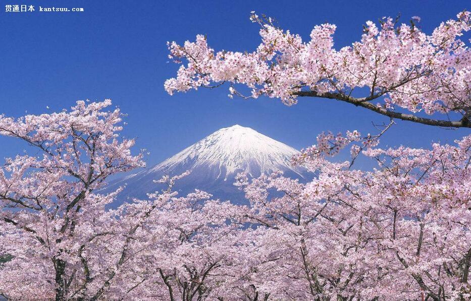 樱花起源于中国 为何却成为日本的国花?